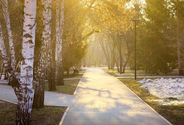 Morgen im frühlingspark der weg des parks liegt zwischen den birken und tannen in den strahlen