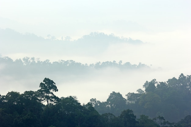 Morgennebel im dichten tropischen regenwald, kaeng krachan, thailand