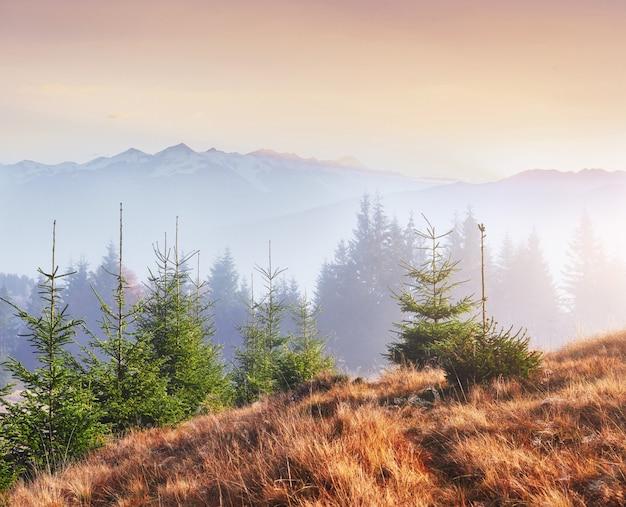 Morgennebel kriecht mit fetzen über den mit goldenen blättern bedeckten herbstlichen bergwald. schneegipfel majestätischer berge im hintergrund