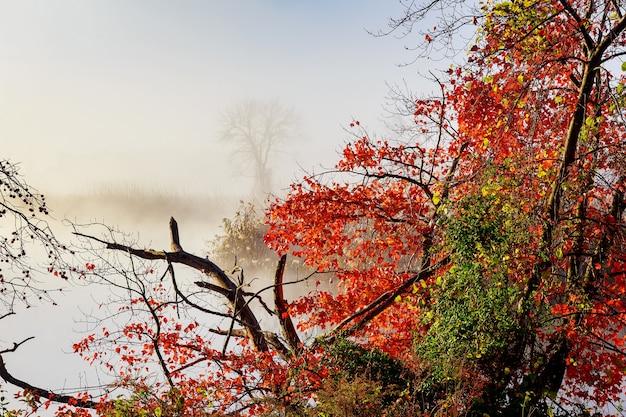 Morgennebel über dem fluss im herbst herbstmorgennebel