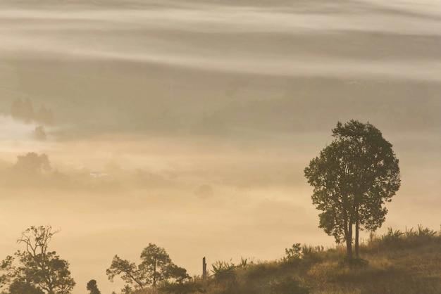 Morgennebel von bäumen bedeckt