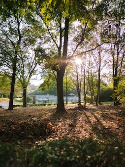 Morgenpark in seoul mit sonnenstrahlen