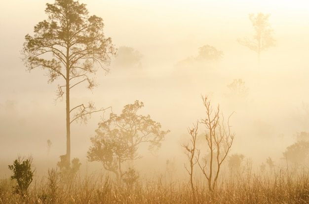 Morgensonne mitten im nationalparkwald