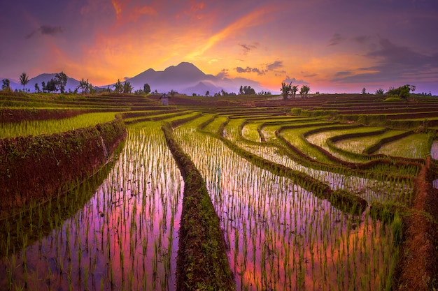 Morgensonnenaufgang an den reisfeldern in nordbengkulu asien indonesien