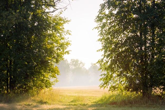 Morgensonnenlicht und nebel bahnen sich ihren weg durch die bäume
