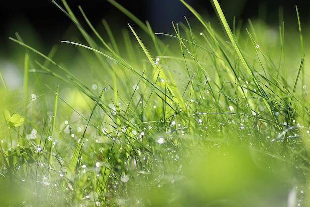 Morgentau auf dem gras
