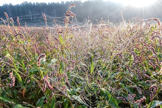 Morgentau in form von kleinen tropfen, die an einem netz in den blättern von wildblumen hängen