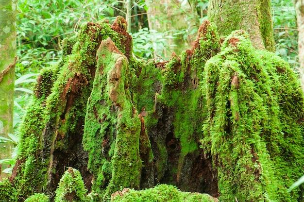 Moss wurde naturgemäß auf stümpfen geboren