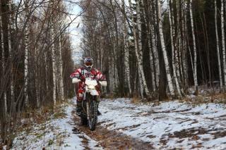 Motorradfahrer, bäume