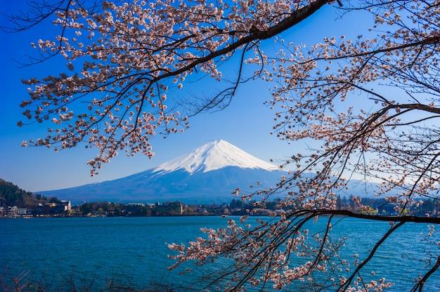 Mount fuji blick vom kawaguchiko see, japan mit kirschblüte