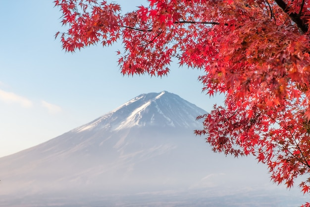 Mount fuji mit rotem blattahorn morgens am kawaguchiko-see, yamanashi, japan