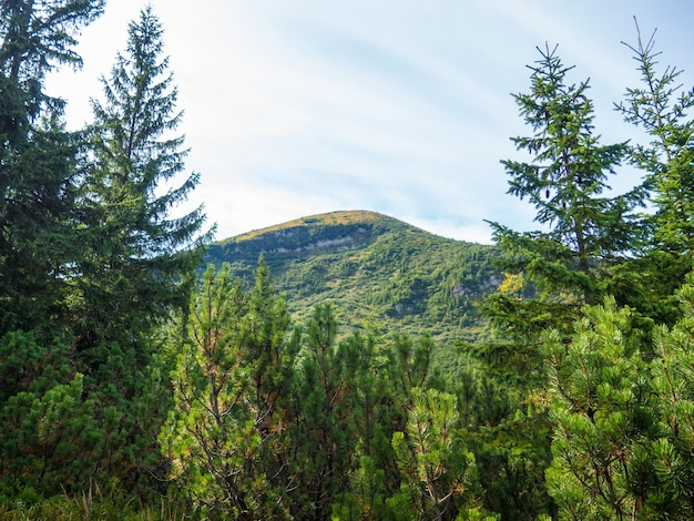 Mount hoverla in den karpaten in der ukraine