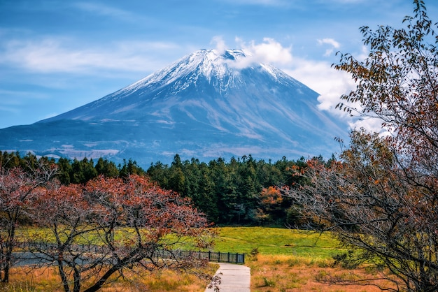 Mt. fuji auf hintergrund des blauen himmels mit herbstlaub tagsüber in fujikawaguchiko, japan.