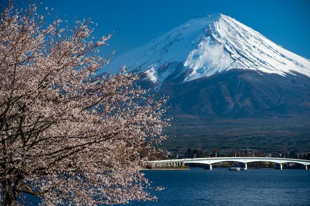 Mt. zeit fujis im frühjahr mit kirschblüten bei kawaguchiko fujiyoshida, japan.