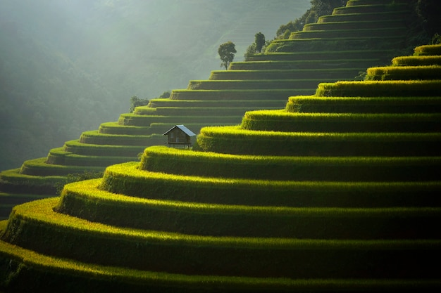 Mu cang chai, terrassenförmig angelegtes reisfeld der landschaft nahe sapa, nordvietnam, reisterrasse während sonnenuntergang, vietnam