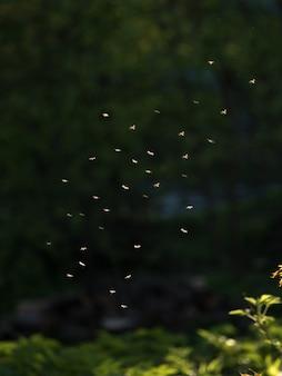 Mücken schwärmen bei sonnenuntergang im wald.