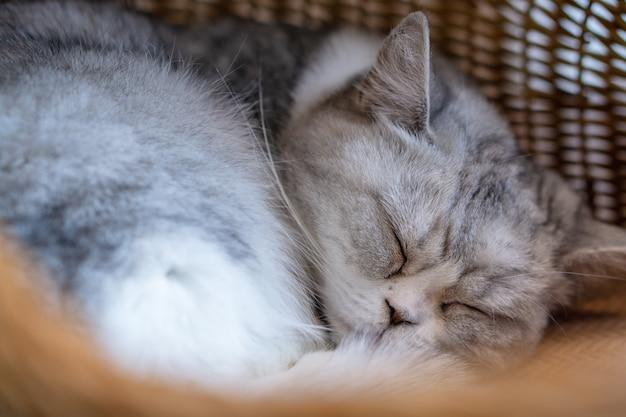 Müde graue katze, die im weidenkorb schläft