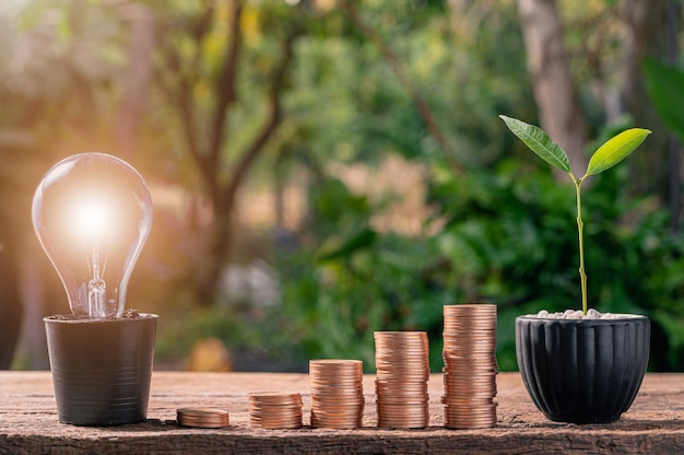 Münze idee glühbirne idee gestapelt, anstatt mit einem baum zu wachsen