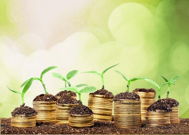 Münzen im boden mit jungen pflanzen im hintergrund
