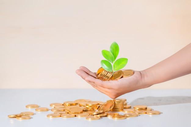 Münzen in der hand, einsparung, geschäft wachsen konzept heran