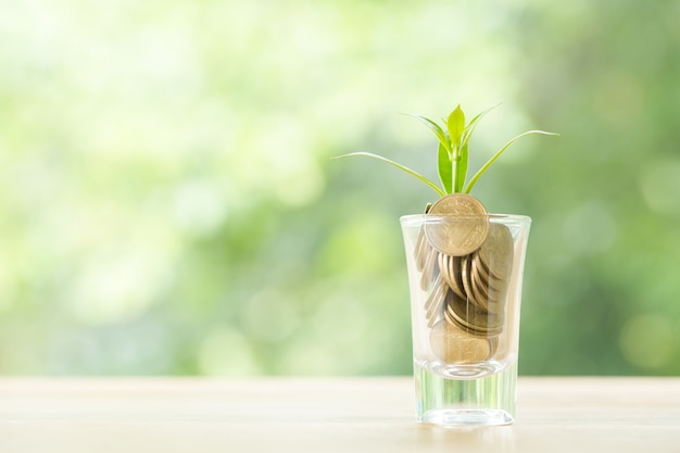 Münzen in einem glas mit einem kleinen baum