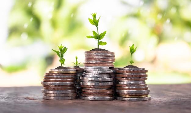 Münzen mit jungpflanze auf tabelle mit dem hintergrund verwischt von der natur