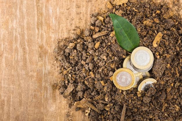 Münzen mit pflanze im boden