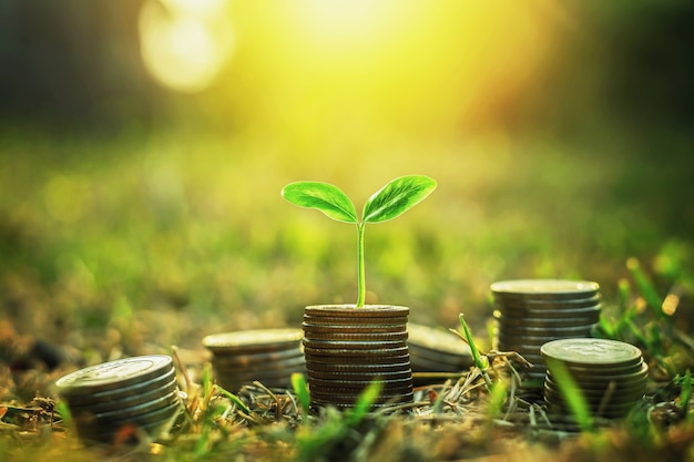 Münzen stapeln sich mit schritt wachsender pflanze und sonnenscheinhintergrund. konzept geld sparen