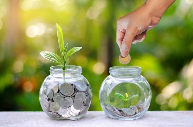 Münzenbaum-glasgefäß-anlage, die von den münzen außerhalb des glasgefäßes auf unscharfem grünem natürlichem, geldeinsparungs- und investitionsfinanzkonzept wächst