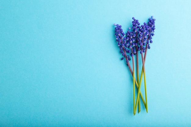 Muscari oder maushyazinthenblüten auf blauem pastellhintergrund. ansicht von oben, flach legen, platz kopieren