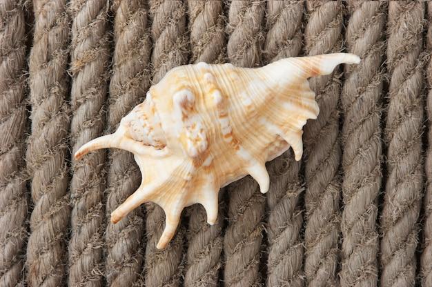 Muschel auf dem hintergrund des hanfseils
