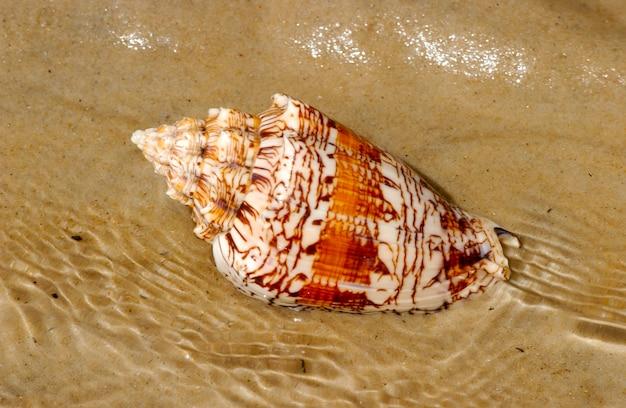 Muschel auf dem strandsand als hintergrund.