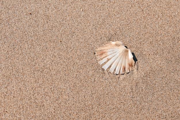 Muschel im sand des meeres