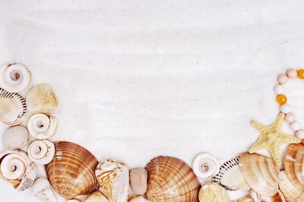 Muschelgrenze auf weißem feinem sand, sommerhintergrund.
