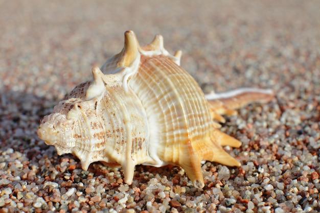 Muscheln am strand. sandstrand mit wellen. sommerferienkonzept.