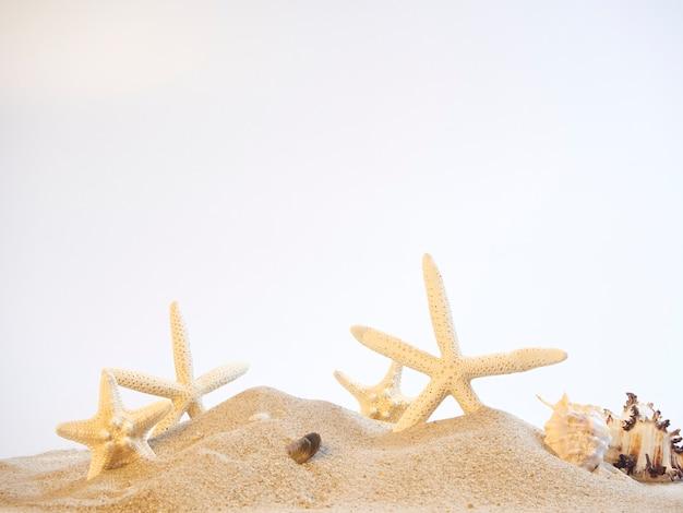 Muscheln am strand, weißer hintergrund.