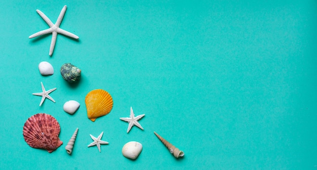 Muscheln auf blaugrünem und cyan-blauem farbhintergrund