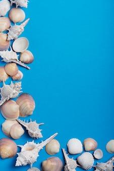 Muscheln auf dem blauen hintergrund. sommerkonzept, ansicht von oben nach unten mit kopierraum für text