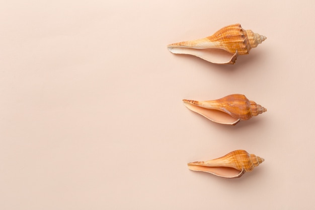 Muscheln auf einem hellen