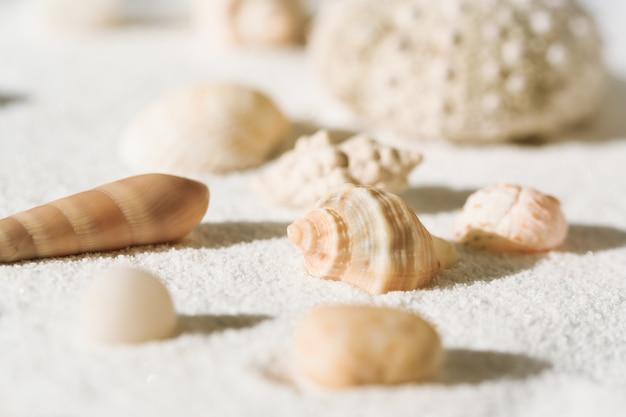 Muscheln auf einem weißen sand