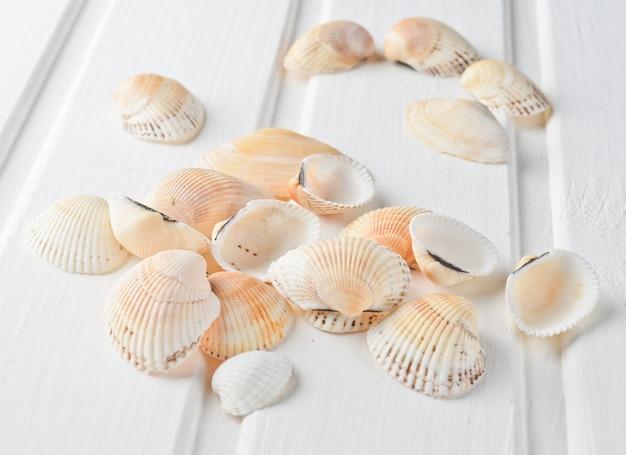 Muscheln auf einer weißen holzoberfläche. strandkonzept.