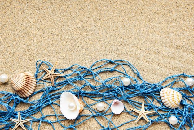 Muscheln auf sand. seesommerferien mit platz für den text. draufsicht