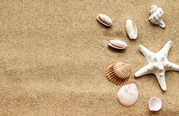 Muscheln auf sand. seesommerferien-tabelle mit platz für den text. draufsicht