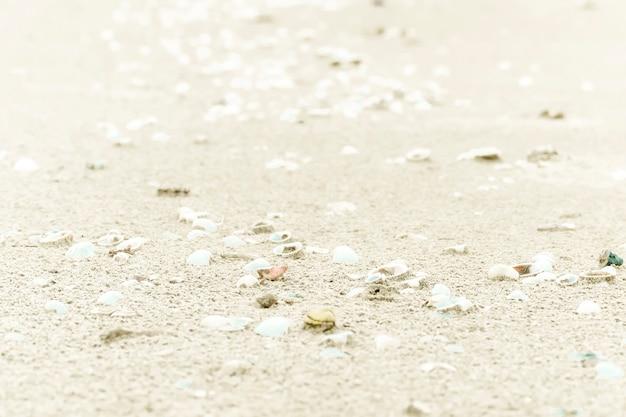 Muscheln auf sand. sommerstrandhintergrund. ansicht von oben. sand-textur. strand hintergrund. passen sie auf die idee des naturkonzepts auf. meer und meer retten.
