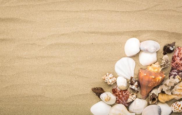 Muscheln auf sand