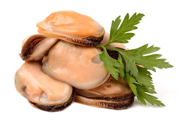 Muscheln auf weißem grund