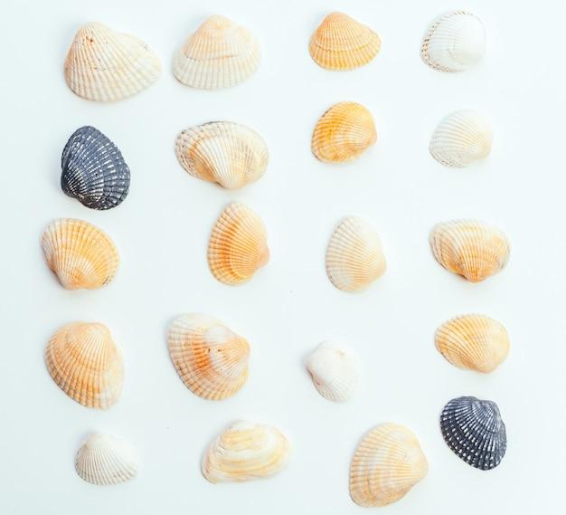 Muscheln auf weißem hintergrund