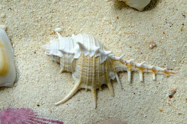 Muscheln auf weißem sand