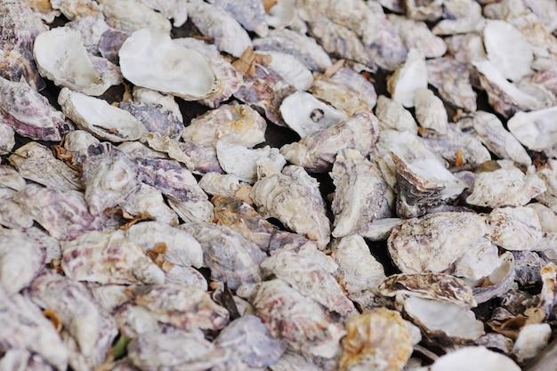 Muscheln aus austern und muschelnahaufnahme