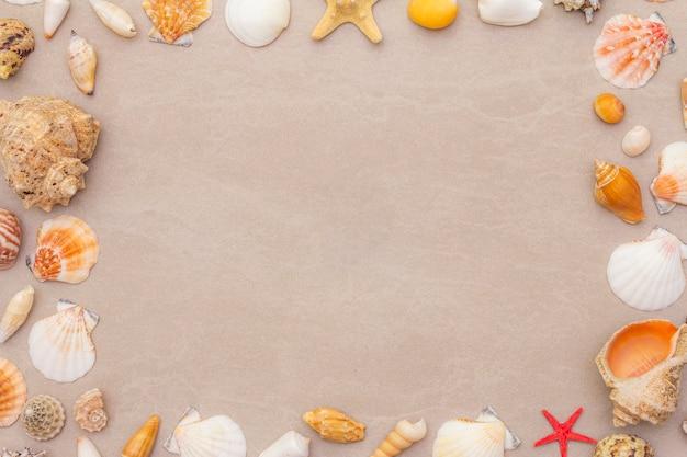 Muscheln gestalten hintergrund, sommerferienkonzept
